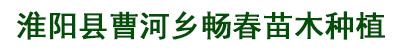 淮阳县曹河乡畅春苗木种植基地